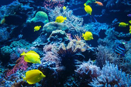 Coral reef and fish underwater photo. Underwater world scene. 免版税图像
