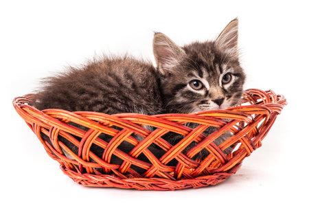 Cute little kitten in wicker basket on white background 免版税图像
