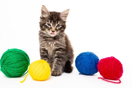 kitten with balls of threads. little kitten on white background. 免版税图像 - 161235301
