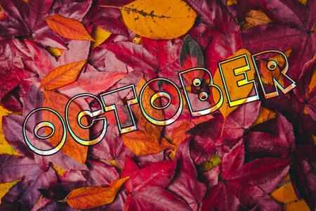 background of autumn leaves. Autumn background 免版税图像