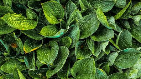 closeup tropical green leaves texture and dark tone process 免版税图像