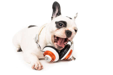 dog listening to music with headphones isolated on white backgro 免版税图像 - 161235414