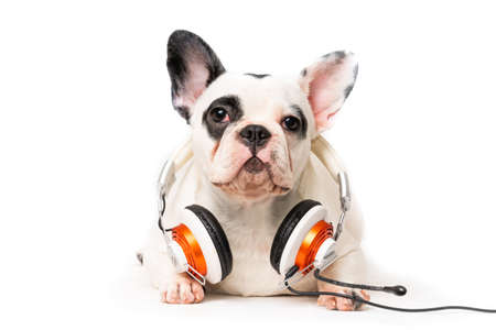 dog listening to music with headphones isolated on white backgro