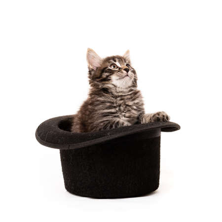 Little kitten sitting in a hat isolated on white background 免版税图像 - 161235498