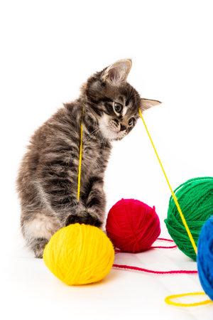kitten with balls of threads. little kitten on white background. 免版税图像 - 161235587