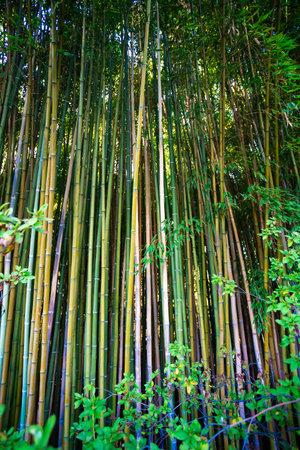 Lanscape of bamboo tree in tropical rainforest 免版税图像 - 161235614