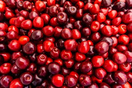 cherry Fruit Background, cherry Texture Pattern