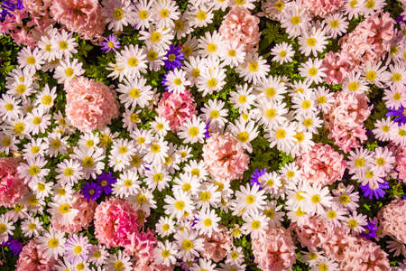 Colorful background from garden of flowers