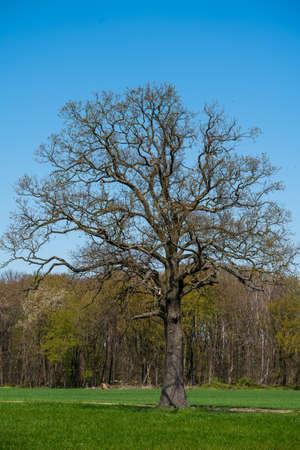Field, Tree And Blue Sky 免版税图像