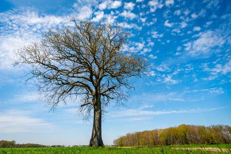 Alone tree in grass field