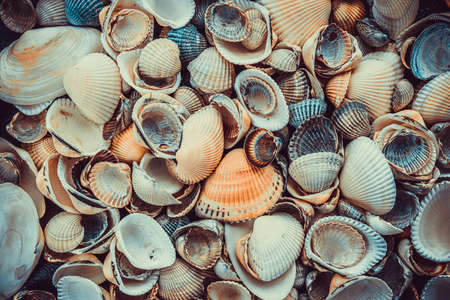 Mixed colorful sea shells as background. Sea Shell Texture