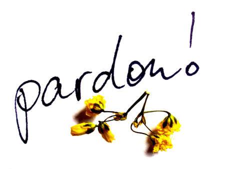 pardon: pardon
