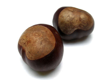 horse chestnuts: horse chestnuts