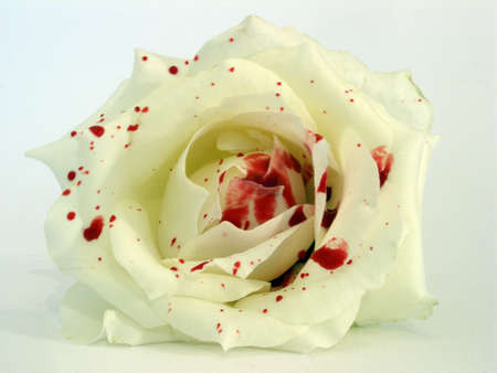 roses and blood: rose