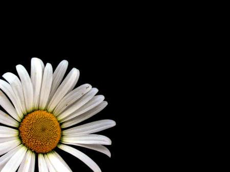 margriet: Marguerite