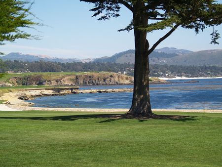 Tree Framing the bay and fairway.