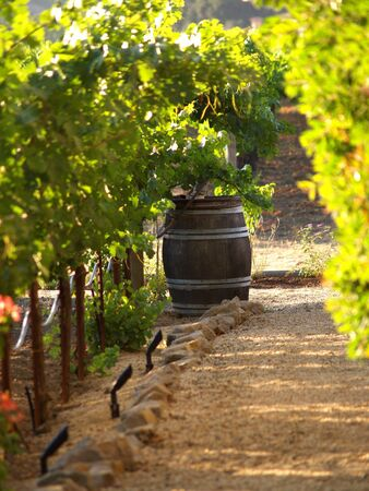 napa valley: This old wine barrel was sitting in a vineyard in Napa Valley.