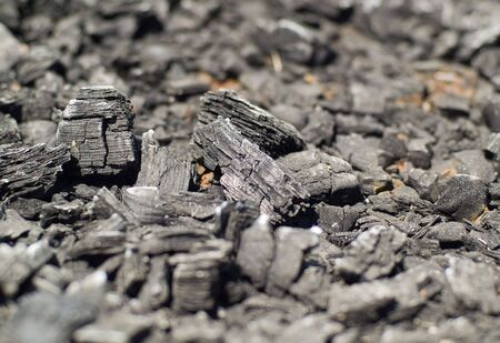 Burnt Wood, looking more like charcoal at this point. Shallow Depth of Field.