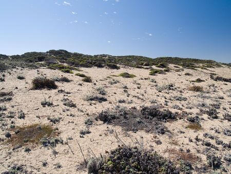 Shot of dunes near the shore, with vegetation.