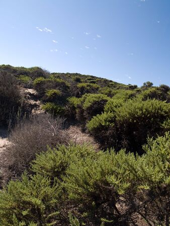 Dunes with various flora growing all over.