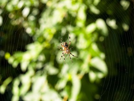 I cant figure out the exact kind of argiope, and spiders scare me a lot. Stock fotó