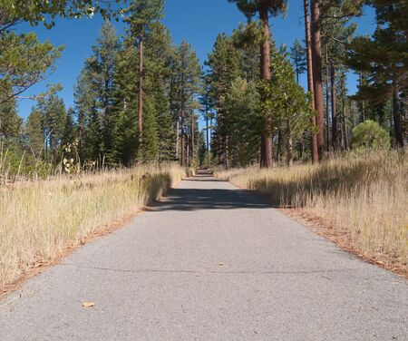 Paved path in the woods, with evergreens on either side. Stok Fotoğraf