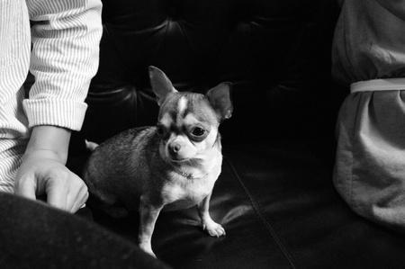 short hair dog: the dog names Kati