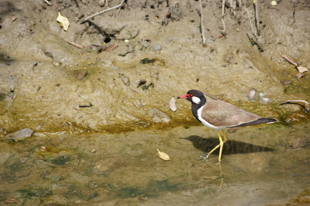 Birds of Laem Phak Bia