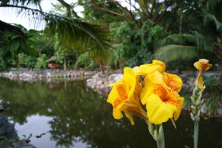 folwer: canna Stock Photo
