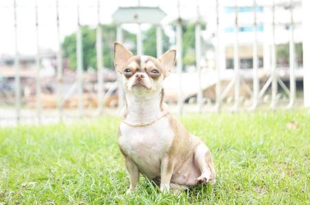 short hair dog: The dog names Kati Stock Photo