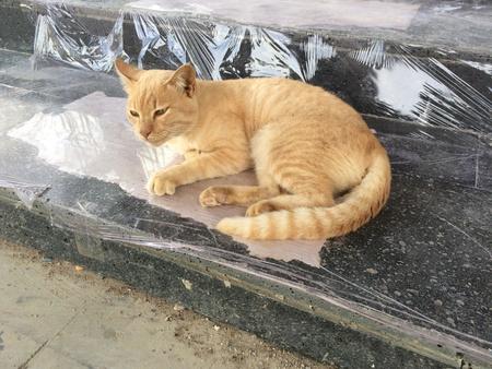 eye: Sleepy orange stripes cat