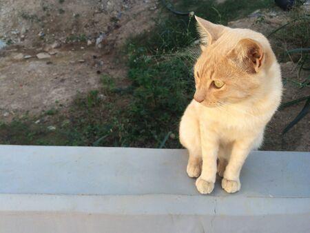 eye: Cat sitting on edge