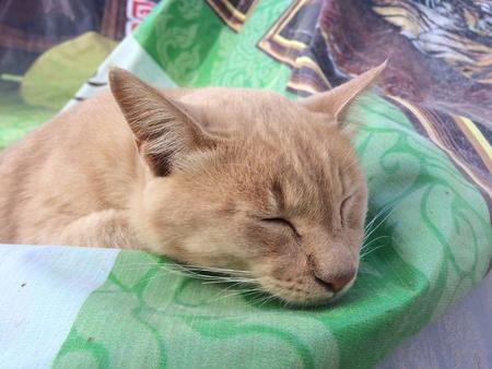 eye: Sleeping orange cat
