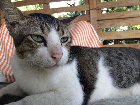eye: Cat lying on table