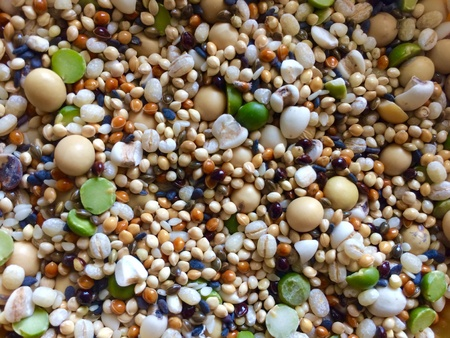 black: Grains and legumes for dwarf hamster Stock Photo