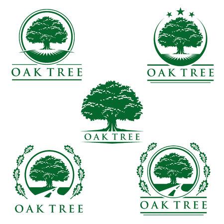 eco green oak tree vector  design