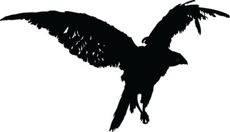 falcon Stock Vector - 14854032