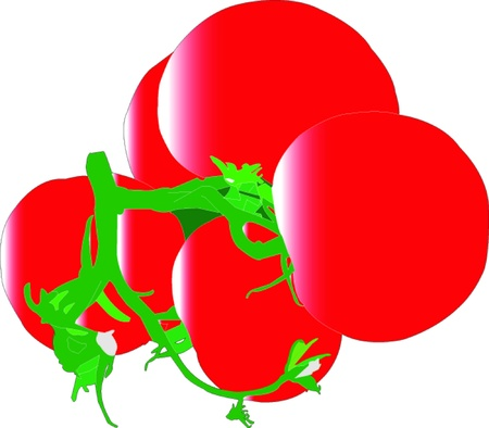salat: tomatoes - vector