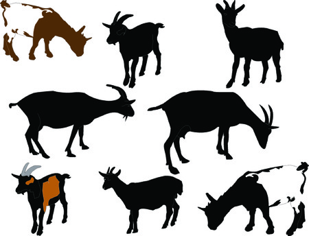 goats collection - vector Illustration