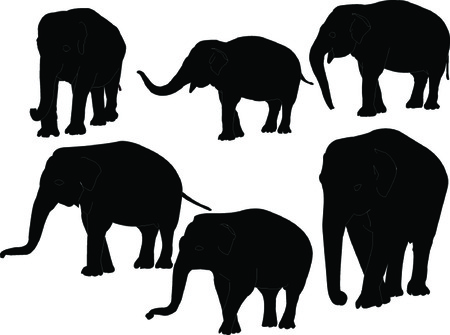 elephant collection - vector