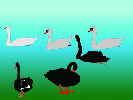 swan collection - vector Vector