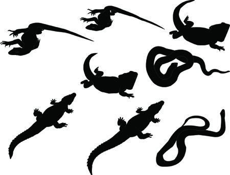 reptils collection - vector Vector