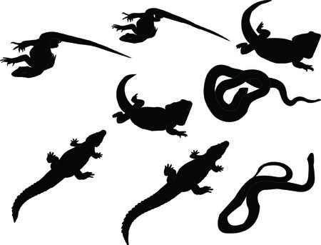 newt: reptils collection - vector Illustration