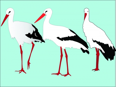 cartoony: storks collection - vector Illustration