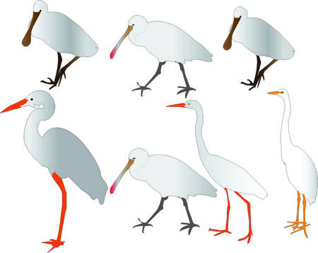 wade: herons collection - vector