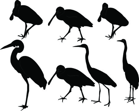 blue heron: herons collection - vector