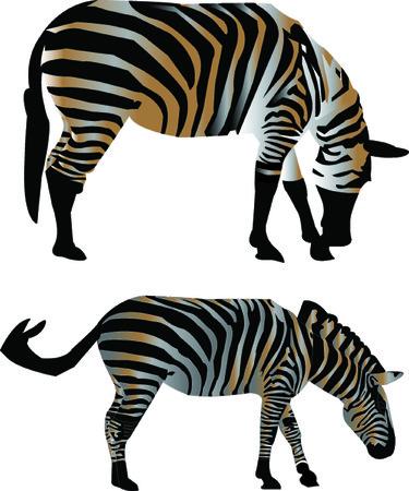 screen print: two zebras - vector Illustration