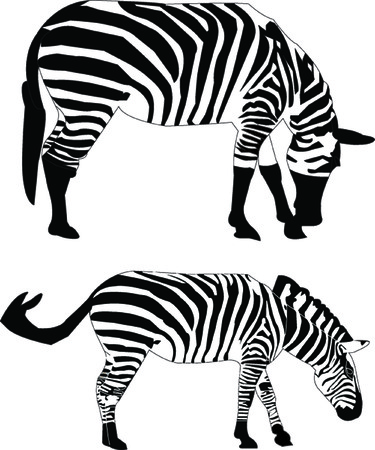 two zebras - vector Vector