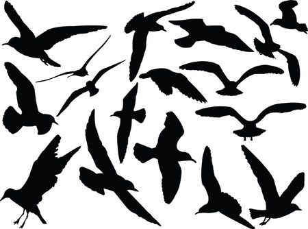 seagull collection silhouette Illustration