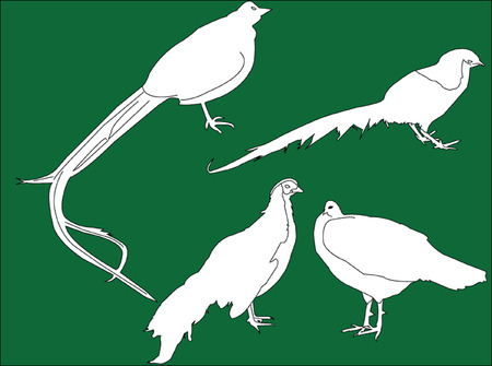 pheasans collection